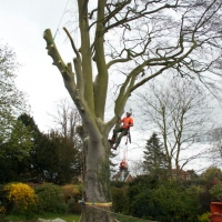 Specialist Tree Surgery East Anglia